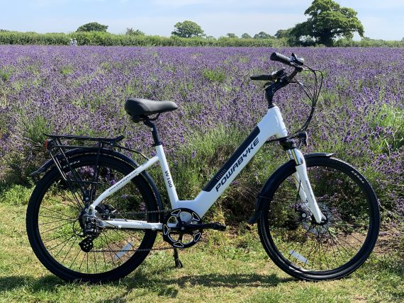 Westminster W100 in the fields of lavender in Faulkland Somerset